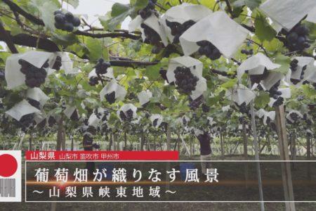 BSTBS日本遺産・葡萄畑が織りなす風景-山梨県峡東地域-