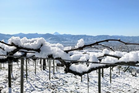 冬・葡萄棚と富士山(山梨市)